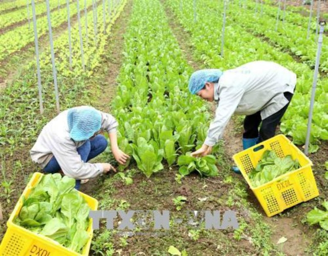 International co-operation drives agriculture development