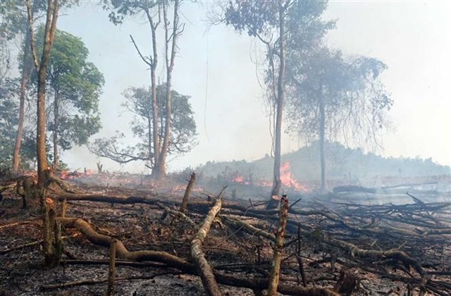 Provinces and cities on alert for forest fires