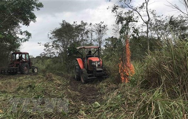 Heatwave destroys dozens of hectares of forest