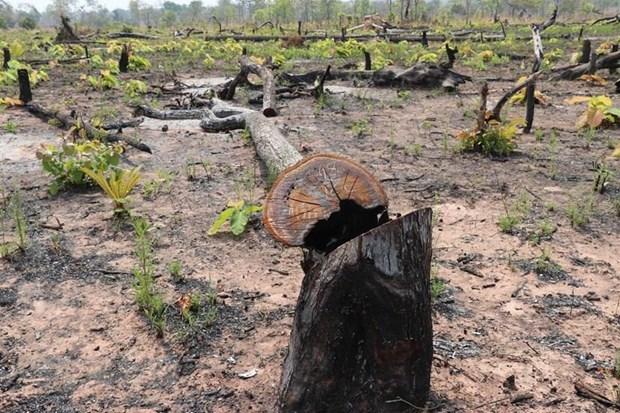 Criminal charges in deforestation case