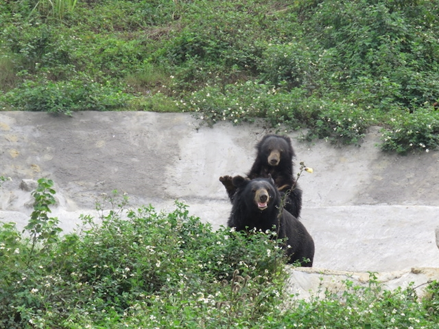 Rescued bears find home