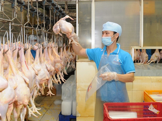 High supply gives Việt Nams poultry firms chance to reach export markets