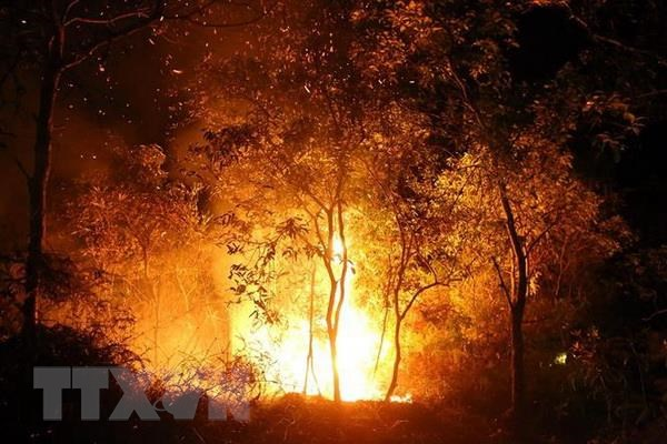 Forest fire put out in Điện Biên