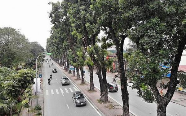 Hà Nội to relocate trees for road expansion