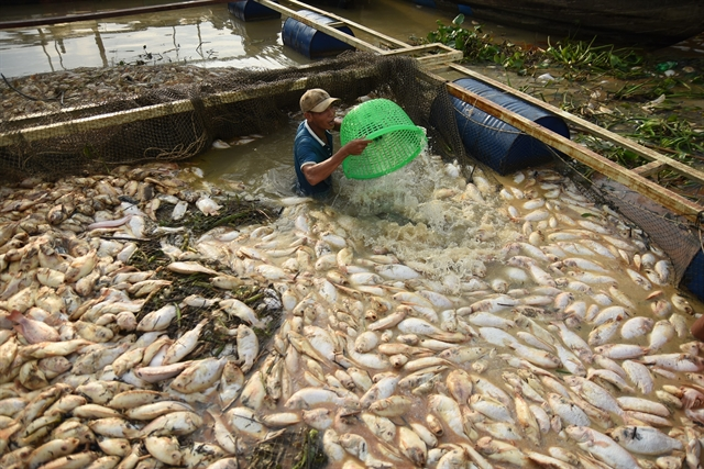 Nearly 1000 tonnes of fish reported dead in Đồng Nai River