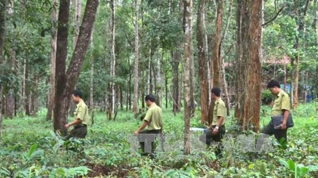 Ministry starts project to restore forests in Central Highlands