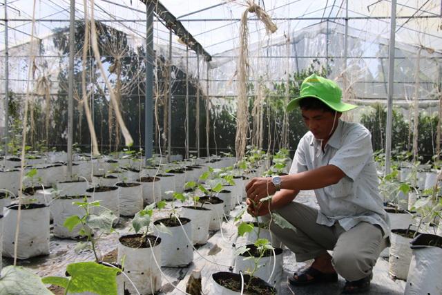 Mekong farmers prosper with organic farming