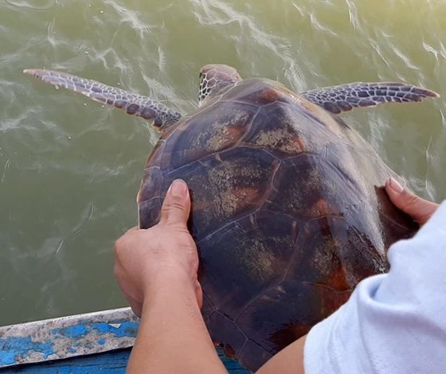 Fisherman refuses cash and releases rare turtle into the ocean