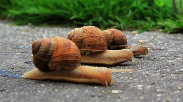 Equitisation moves at a snails pace in May