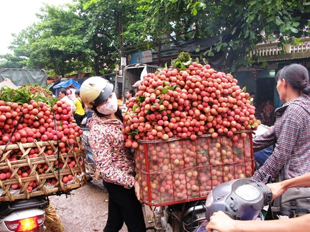 Việt Nam becomes second largest exporter of lychees