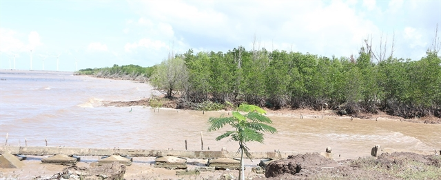 Bạc Liêu struggles to protect coastal forests