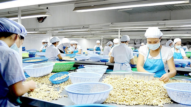 Dutch company to invest $250m in Bình Phước cashews
