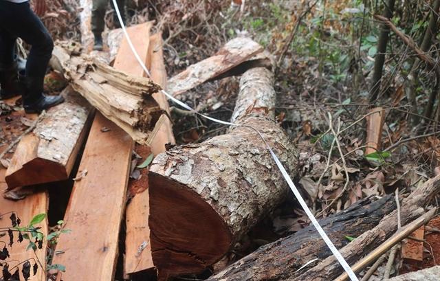 Bắc Kạn to prosecute deforestation culprits