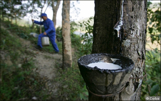HAGL Agrico to sell rubber company to Thadi