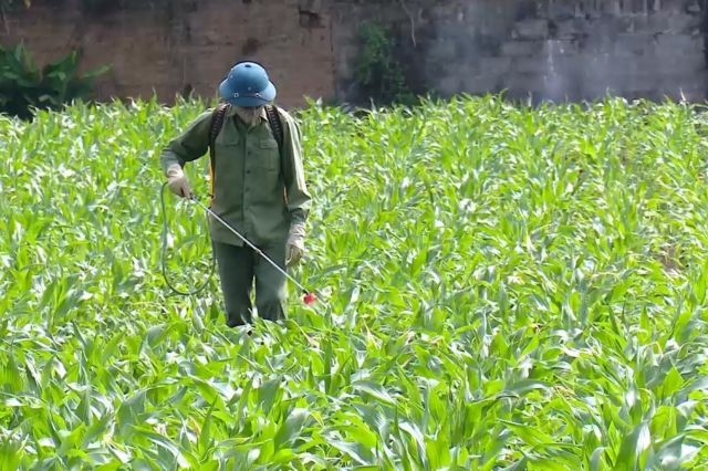 Northern provinces urged to bring pesticide use under control