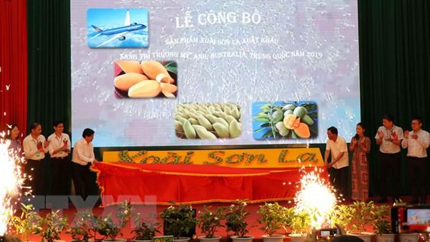 Sơn La mangoes exported to demanding markets
