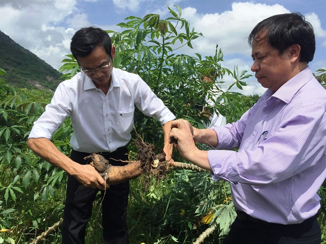Việt Nams agricultural products facing barriers to enter Chinese market