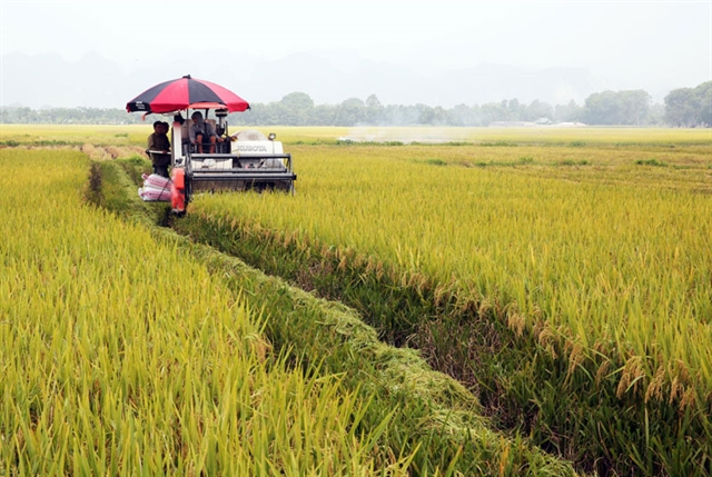 Hà Nộis farmers grow high-quality rice for export