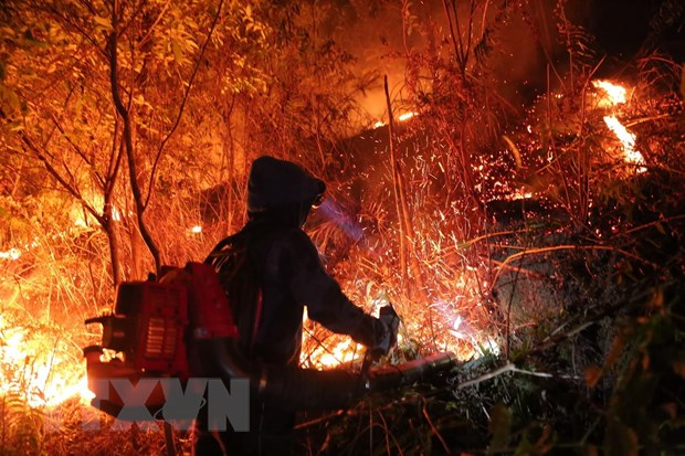 Forest fire in Hà Tĩnh Province under control
