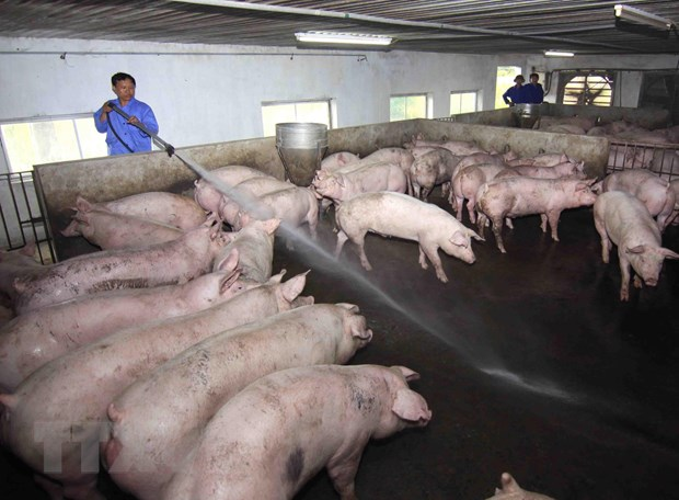 Bio-security most effective measure against African swine fever
