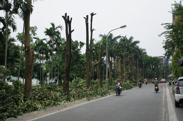 Hà Nội removes more than 100 trees for unpleasant odour