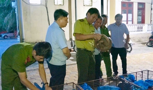 Couple arrested for illegally transporting pangolins