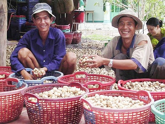 Mekong south-east regions told to take advantages of technology andfavourable climate to develop mushroom production
