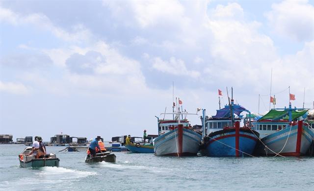 Huỳnh Đế crabs bring better income to Phú Quý Island fishermen
