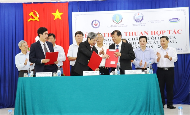Tây Ninh to get safe dairy cow breeding area