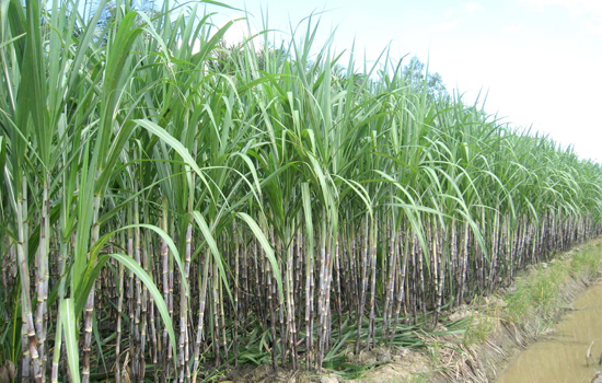 Sugar firm to sell more than 61 million treasury shares