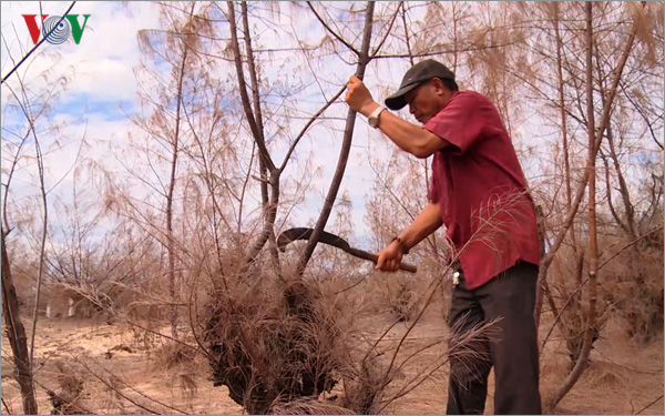 Drought in Phú Yên destroys several hectares of forest