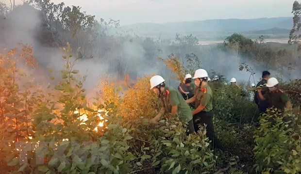 Forest fire destroys 200ha of forest in Phú Yên