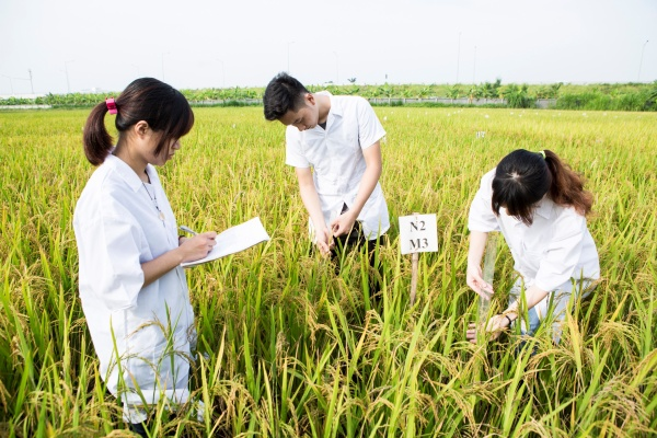 Young people not interested in agricultural studies