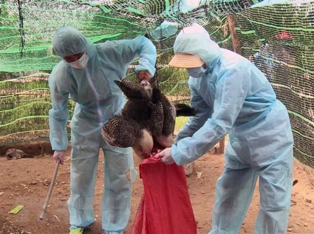 Influenza A (H5N6) outbreak in Bà Rịa-Vũng Tàu