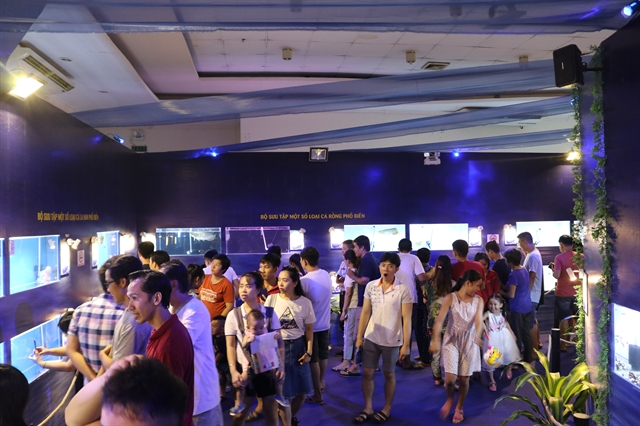 Fourth Ornamental Fish Festival kicks off in HCM City