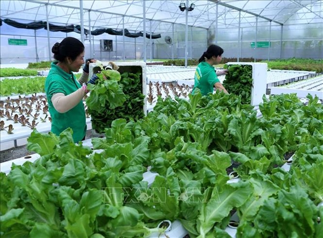 Mekong Delta city seeks to use advanced farming technologies
