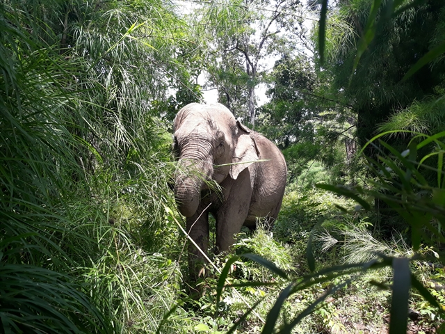 GPS tracking launched to monitor wild elephants