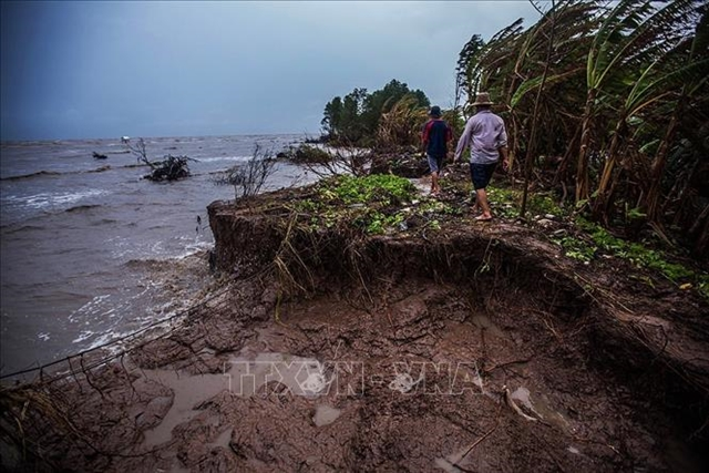 Cà Mau Province takes steps to prevent erosion