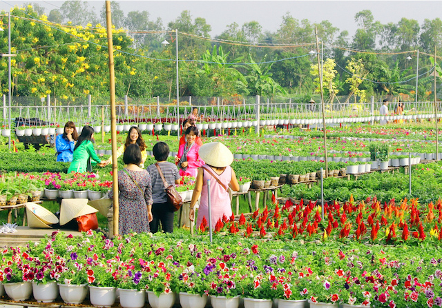 Be a farmer for a day in Đồng Tháp