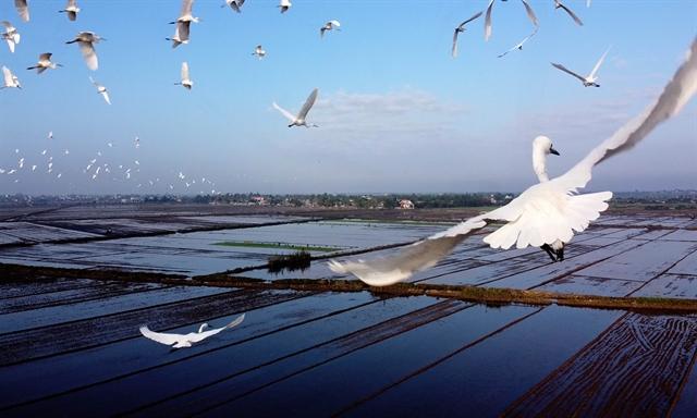 Thừa Thiên Huế takes measuresto protectwild birds