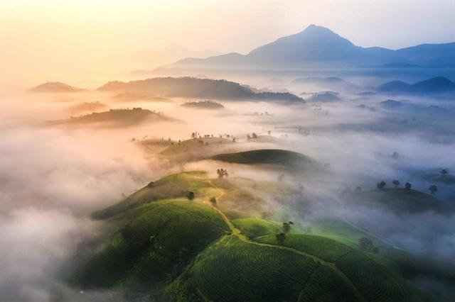 Long Cốc tea hill spread their green to heavens rim