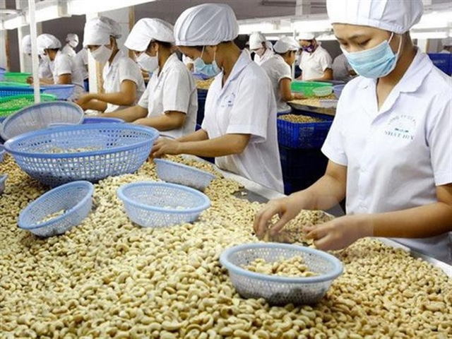 More efforts needed to maintain VNs leading position in cashew export