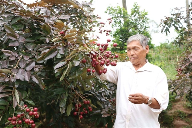 High demand for rare fruits in Mekong Delta