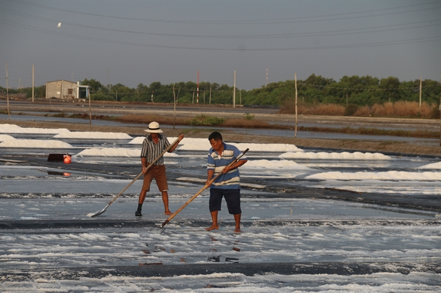 Salt farmers clean harvests bring high prices