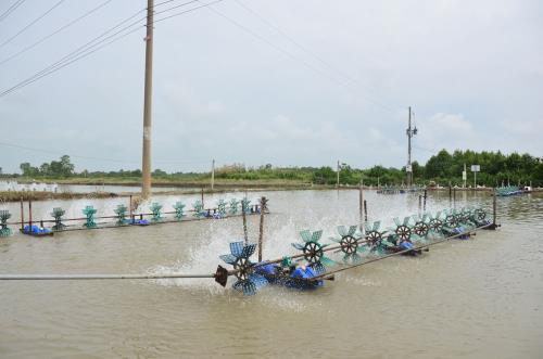 National programme helps Sóc Trăng sustainably exploit fisheries resources