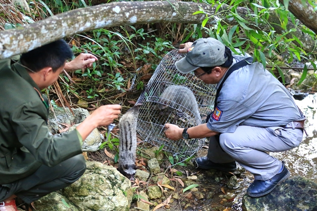 Wild animals released in Sơn Trà reserve
