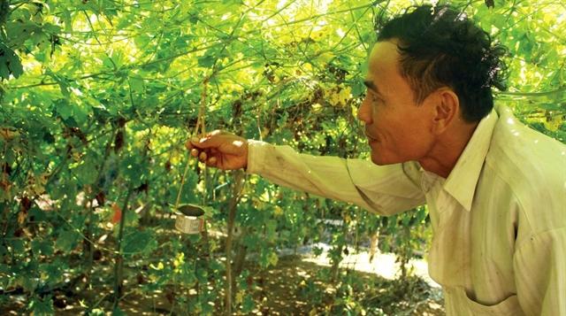 Quảng Ngãi farmers go organic