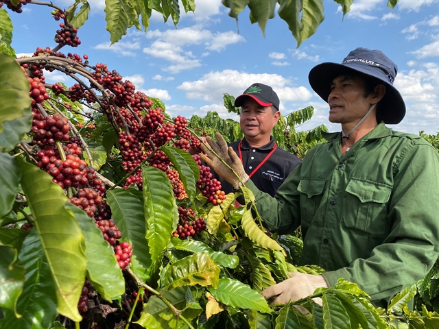 Nestlé programme helps increase coffee farmers incomes