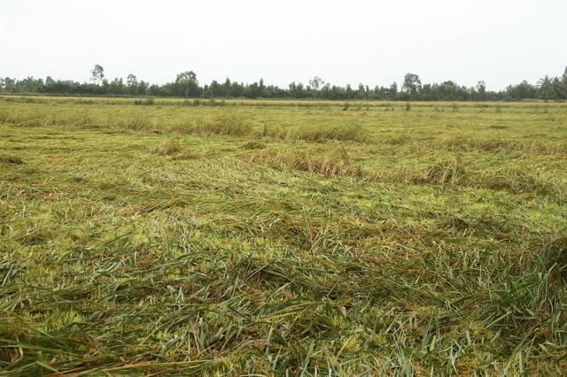 Mekong Delta protects crops shrimp pondsagainst rains high tides