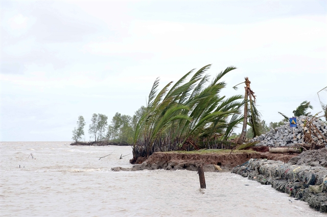 Cà Mau declares emergency as western sea dyke is badly eroded